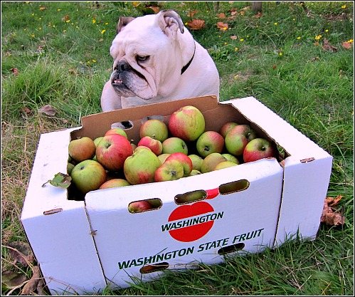 An Apple a Day Keeps the Veterinarian Away