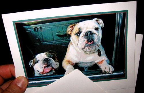 lightmark press bulldogs