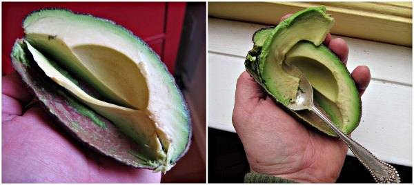 avocado slice collage