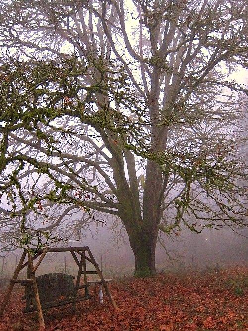 lodgepole swing big leaf maple