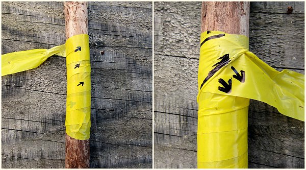 taped tree trunk