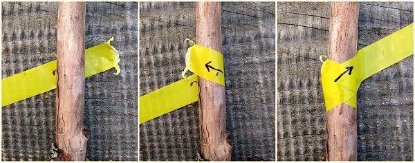 tree tape tanglefoot.jpg