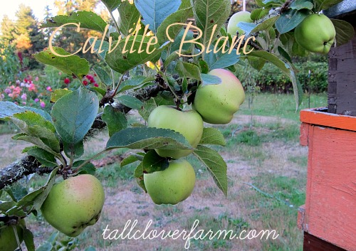 Great Apples for the Home Orchard