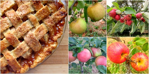 Fresh apples = Fresh pie