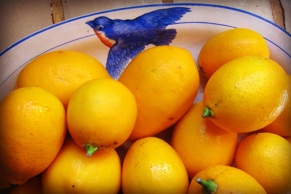 Preserving Lemons: A Sweet Way to Save a Sour Fruit