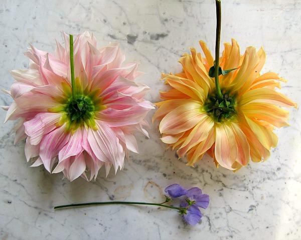 Big flower, short stems