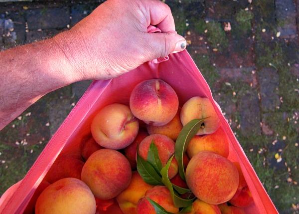 nanaimo peaches tee shirt