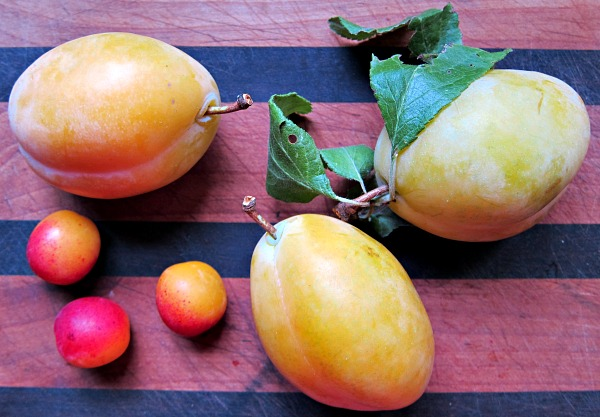 yellow egg and mirabelle plums