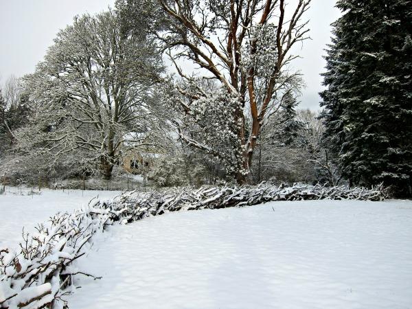 madrona-fence-snow