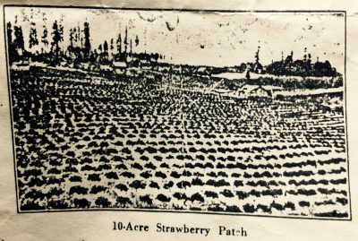 Vashon Island strawberry patch 1919