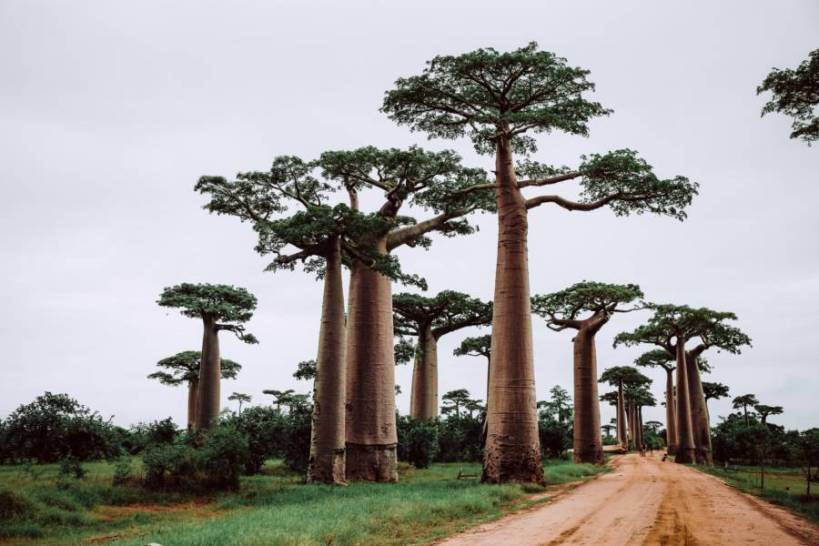 Return flights from Milan, Italy to Madagascar for only €454 over Christmas! [€454 / $511 / 3.5 Cents Per Mile]