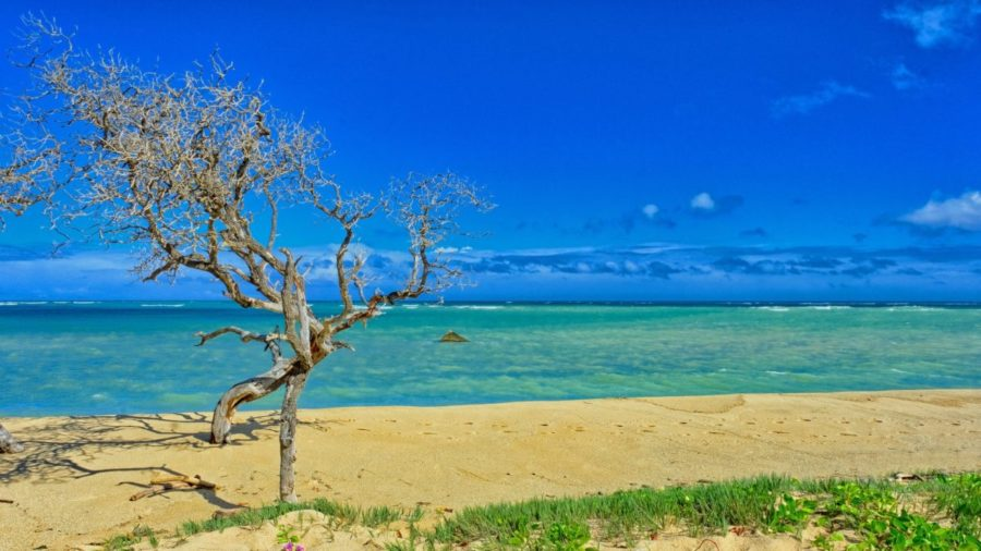 Cheap flights from Chicago to Kahului for $234 return!