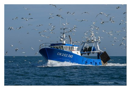 When the seagulls follow the trawler......?