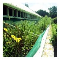 Old Wellington Prison Gardens