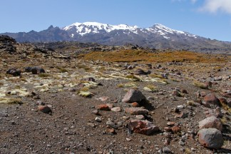 Mt Ruapehu from Scoria Flat