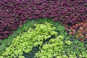 foliage, the bund, shanghai
