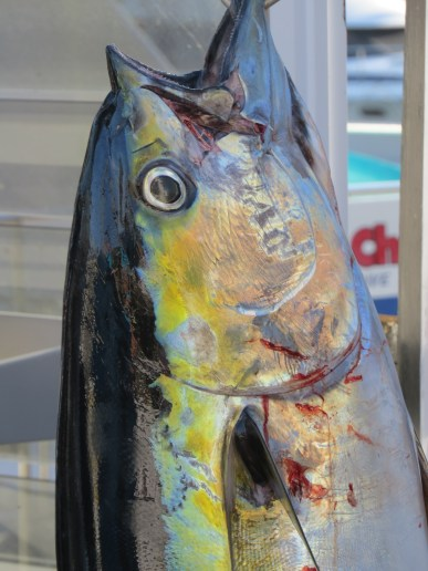 RIP fish