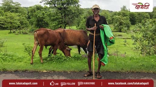 livestock Konkan Dapoli 1