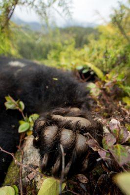 Nolan bear trip 17