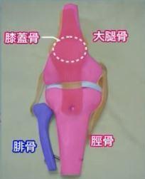 膝の骨の構造.JPG