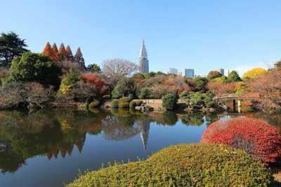 新宿御苑から見える高層ビルの画像です。