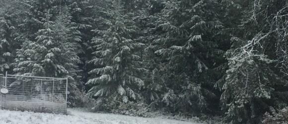 Snowy fall day