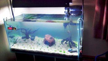 Sebutkan Alat Alat Pelengkap Akuarium Dan Jelaskan Fungsinya Sebutkan Itu