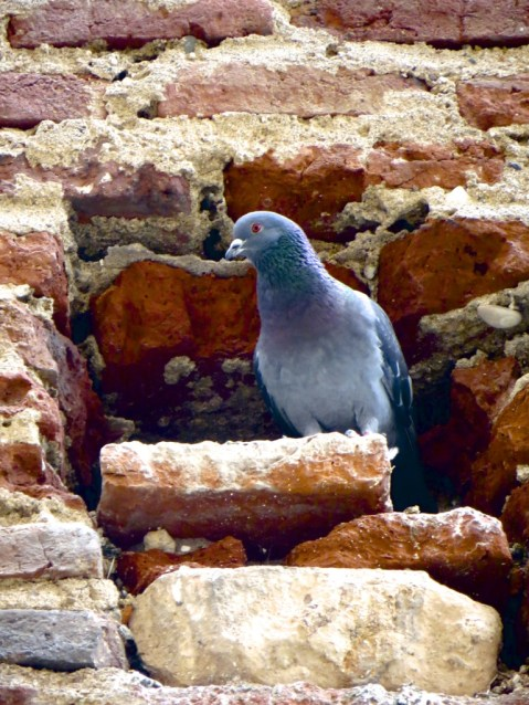 Pigeon holes in brick