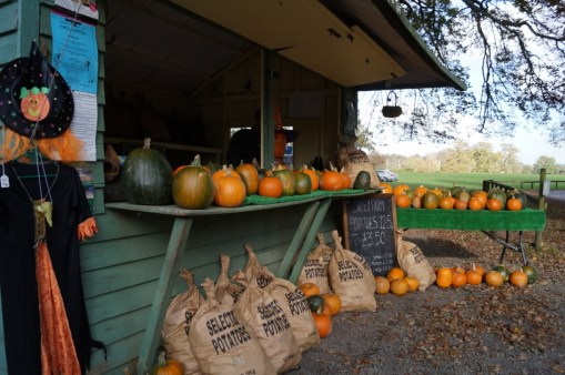 Carving pumpkins for sale