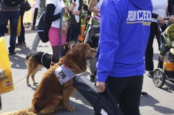 They had a running event for dogs...