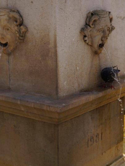 Thirsty flying rat