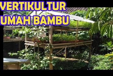 Vertikultur Rumah Bambu