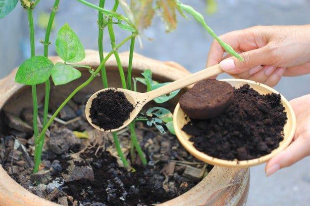 Media Ampas Kopi untuk tanaman