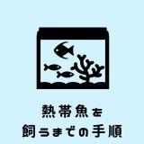 熱帯魚を飼うまでの方法