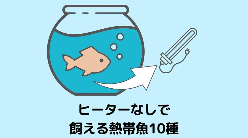 ヒーターなしで飼える熱帯魚