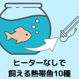 【12種を紹介!】ヒーターなし(無加温)でも飼える低温に強い熱帯魚とは?【注意点あり】