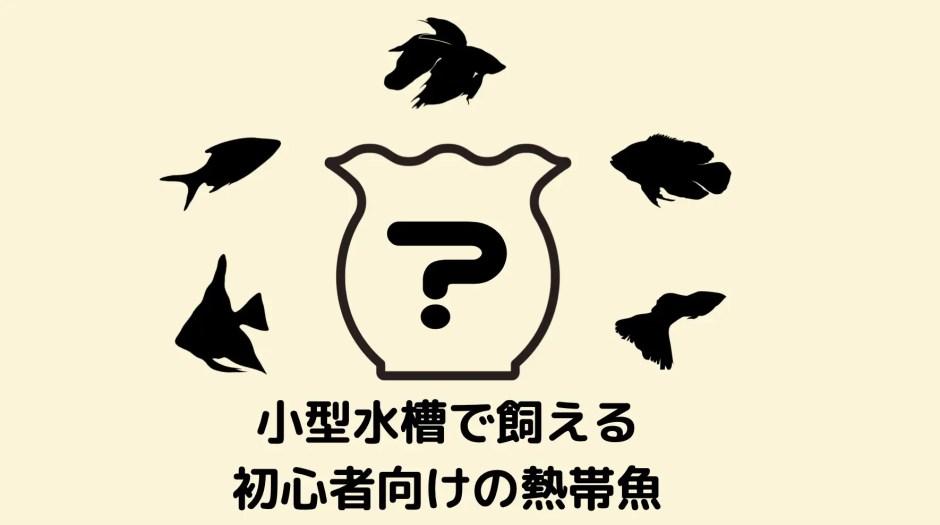初心者におすすめの熱帯魚1