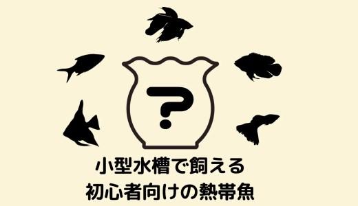 【珍種&定番種20選】小型水槽でも飼いやすい初心者におすすめの熱帯魚