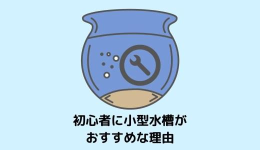 【小型水槽がおすすめ!】初心者におすすめな水槽サイズとその理由【お金がかからない!】