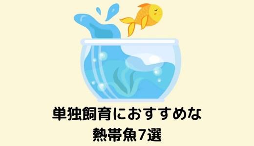 【一匹だけ飼育したい!】単独飼育におすすめな飼いやすい熱帯魚7選
