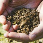 ケイ素(珪素)量が減った現在の土壌と健康への影響