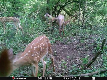 Trail Camera Photos, from Dennis Puls, Frackville, 9-16-2015 (11)