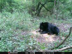 Trail Camera Photos, from Dennis Puls, Frackville, 9-16-2015 (19)