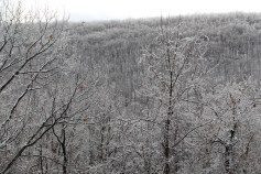 winter-wonderland-ice-on-trees-along-sr54-and-interstate-81-barnesville-1-24-2017-18