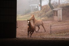 horses-at-horses-and-horizons-therapeutic-learning-center-west-penn-1-21-2017-21