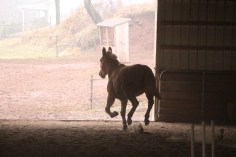 horses-at-horses-and-horizons-therapeutic-learning-center-west-penn-1-21-2017-31