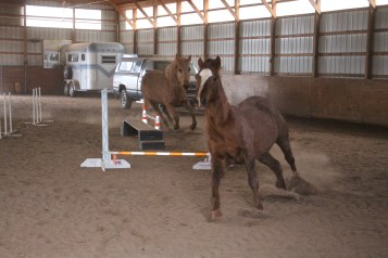 horses-at-horses-and-horizons-therapeutic-learning-center-west-penn-1-21-2017-46