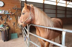 horses-at-horses-and-horizons-therapeutic-learning-center-west-penn-1-21-2017-5