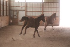 horses-at-horses-and-horizons-therapeutic-learning-center-west-penn-1-21-2017-54