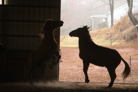 horses-at-horses-and-horizons-therapeutic-learning-center-west-penn-1-21-2017-66